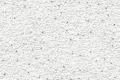 פינסטרטוס מיקרו (כלנית) מונח